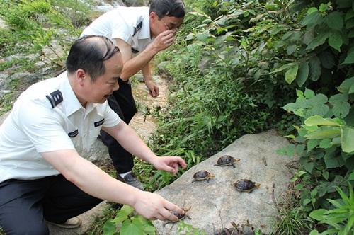 南省重点保护野生动物