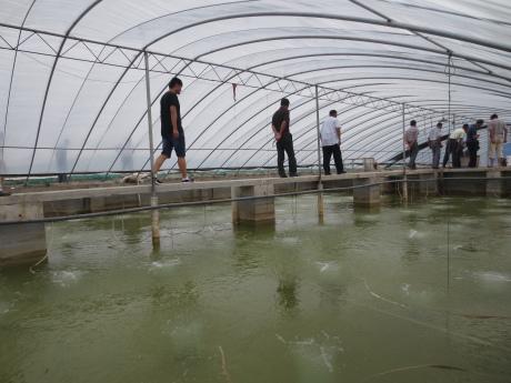 池塘鱼鳖混养;稻田养小龙虾
