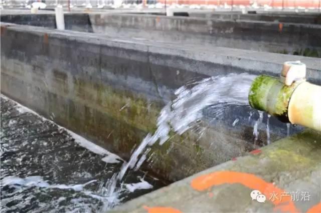 福建东山岛四千平鲍鱼池改养大海马 投资五百万