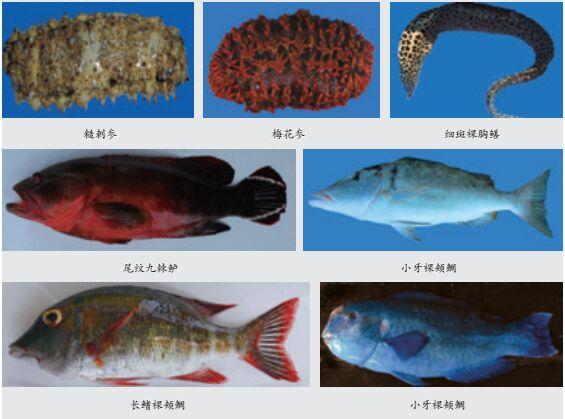 西沙群岛海洋渔业资源调查研究