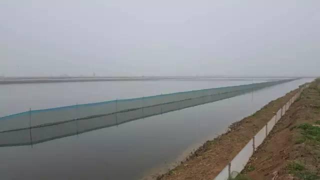 既然池塘养殖小龙虾面积占比很小,那市场上如此多的小龙虾到底来自