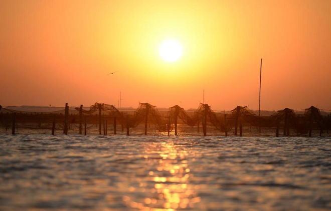 实拍阳澄湖大闸蟹养殖户捞蟹 每天要喂上千元冻鱼