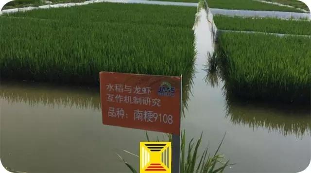稻田龙虾养殖池设计图分享展示