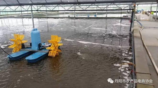 江苏镇江丹阳市现代生态水产养殖场利用工厂化智能大棚做优澳洲淡水龙