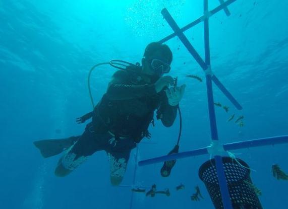 壁纸 动物 海底 海底世界 海洋馆 水族馆 鱼 鱼类 571_415