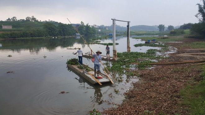 广西南宁青秀区积极行动妥善处置马峦江网箱死鱼现象