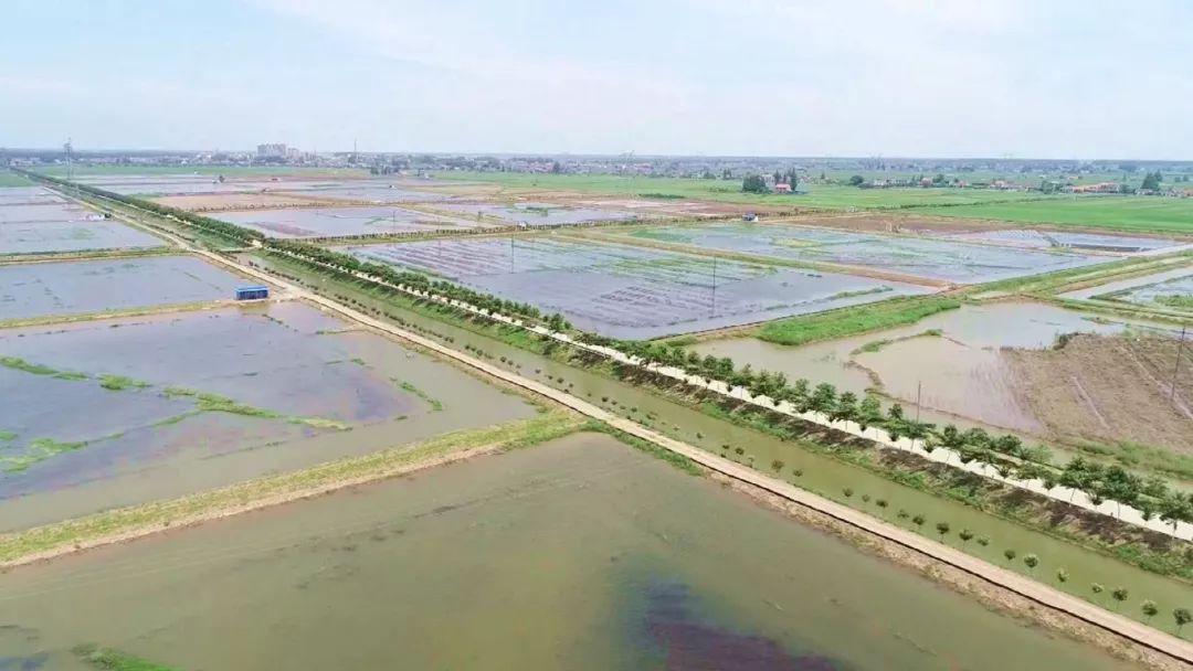 大气魄!湖北荆州公安县将携手通威打造中国绿色小龙虾第一品牌!
