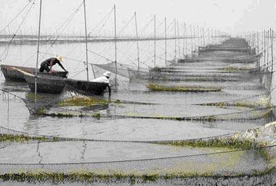 安徽巢湖抗风浪网箱养鱼获得成功