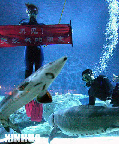 北京海洋馆首批中华鲟将放归长江
