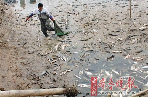 50亩鱼塘漂起大片死鱼 水源疑遭污染