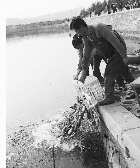 南岸放鱼优化水质 北岸渔网大肆捕捞
