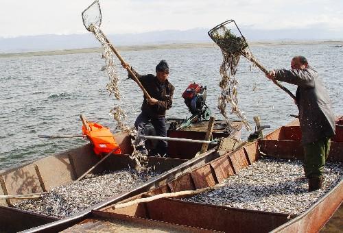 新疆阿勒泰开湖捕鱼忙