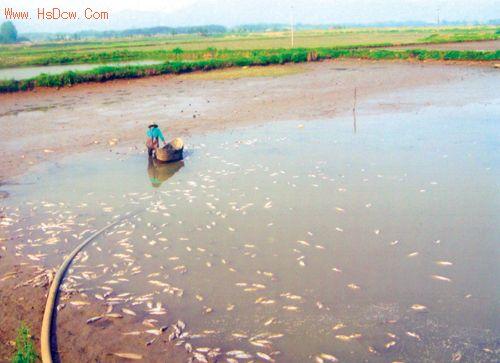 200亩鱼池莫名死鱼万多斤