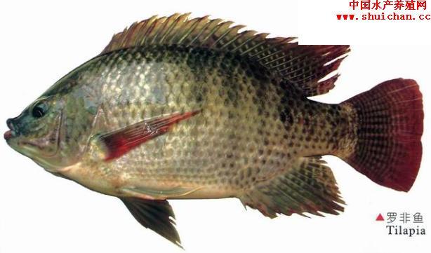 投喂量视水中浮游动物多少而定