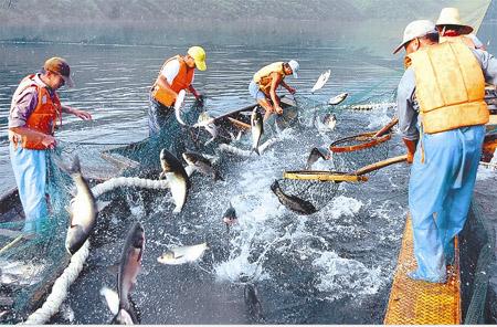 安徽宁国:满塘鱼跃满塘欢