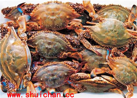 蟹内部结构图解