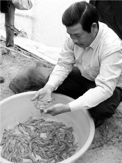 泰国养殖技术助推中山对虾健康养殖