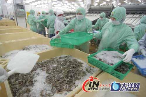 湛江国联5吨活虾昨日供港 每年至少供应六千吨