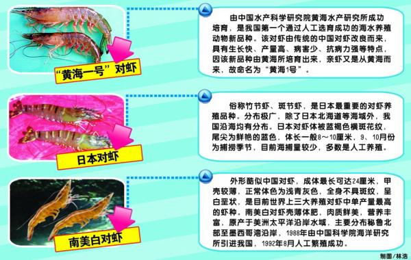 中国对虾登陆市场 中秋餐桌将上演三虾争宠