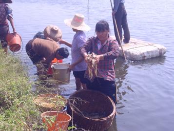 浙江徐闻:20亩虾塘疑遭投毒 出现大量死虾