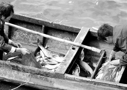 武汉南湖大面积翻塘 市民担心死鱼会否流向餐桌