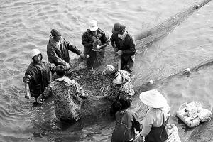 咸酸田改成虾塘 亩产两百公斤谷到一千公斤虾