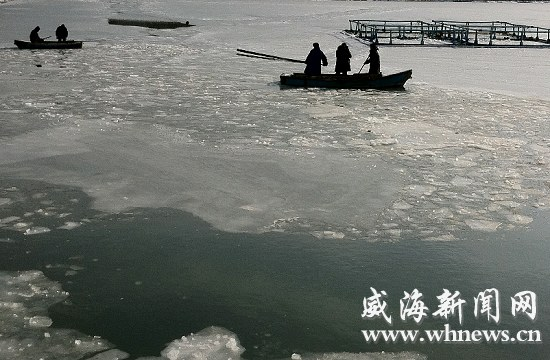 1月17日,数十艘大马力渔船被冻在桑沟湾南畔无法出海作业,养殖工人利用工具试图将海冰击碎以开辟航道。   【荣成】冰面上凿出渔船航道&nbsp   昨日,桑沟湾南畔,30余厘米厚的冰封住主航道。养殖户们已在荣成市海洋与渔业部门及宁津街道办事处工作人员的指导下破冰自救,有关部门的工作人员也在对海冰对近海养殖业造成的损失进行摸底和调查。&nbsp   当日11时许,记者在位于桑沟湾南岸的宁津街道办事处鸿泰渔业码头看到,一艘作业归港的渔船上,一名养殖工人正用铁棍铲除该船前桅杆上厚厚的冰霜。码头东侧,几名试图