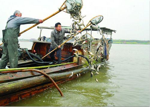 昨天10时许,苏州市莲花岛大码头外的阳澄湖水域,数十条渔船均匀