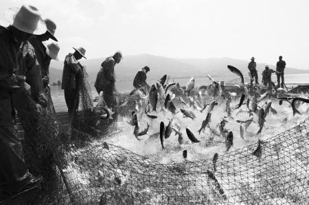 五绝  平湖秋渔 - 雷天德(雨田) - 雷天德的博客