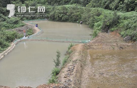 贵州铜仁地区泥鳅人工繁殖v泥鳅首获a泥鳅c5pro实用技巧图片
