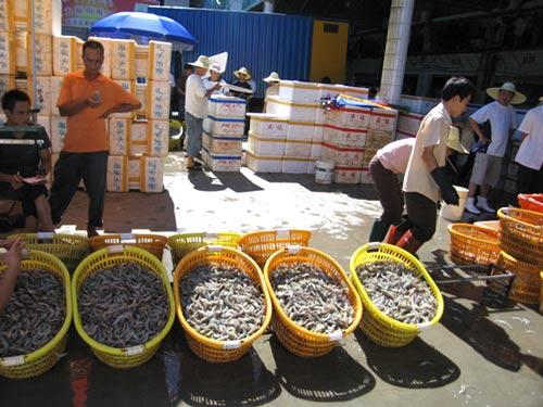 广东湛江霞山水产批发市场南美白对虾交易井喷