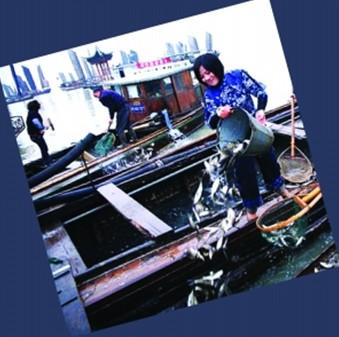 第四届太湖(常州)放鱼节今天启动