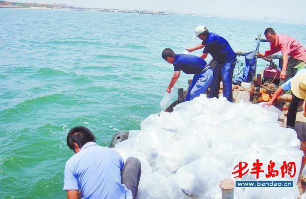 渔业放流苗种开始认购 山东青岛胶南市三海湾为主要放流点