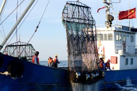 獐子岛虾夷扇贝在海洋牧场喜获丰收; 上半年大连獐子岛虾夷;; 上