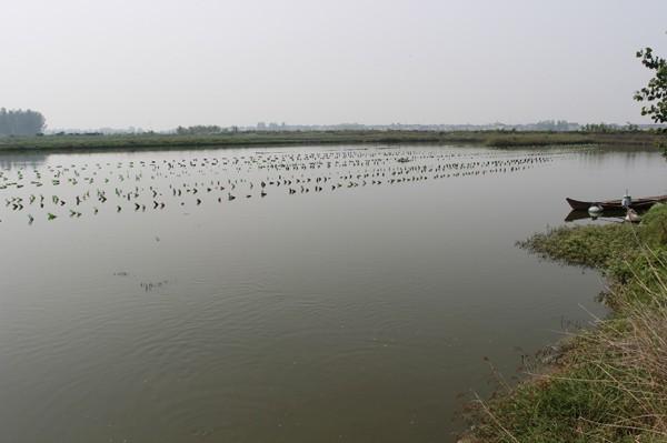 在张国忠的鱼塘里除了甲鱼和其他鱼类外还有很多的蚌类,蚌类的肉能