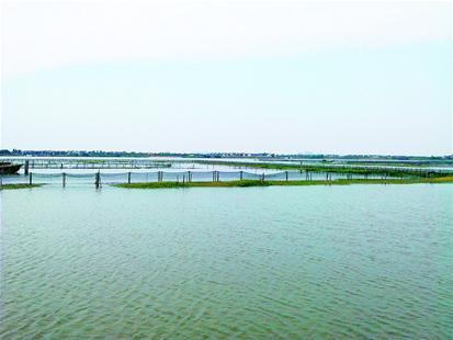 阳澄湖大闸蟹养殖户俞三男:懒人养不了好螃蟹