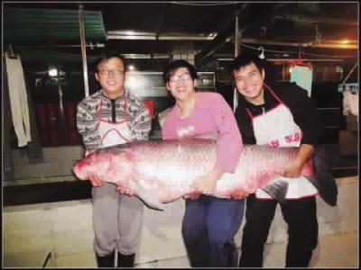 上海26岁教程千岛湖小伙钓起130斤重大乌青鱼芭蕾舞视频下载水域图片