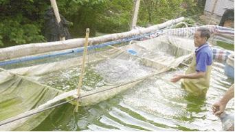 暖春令罗非鱼提前进入产苗旺季