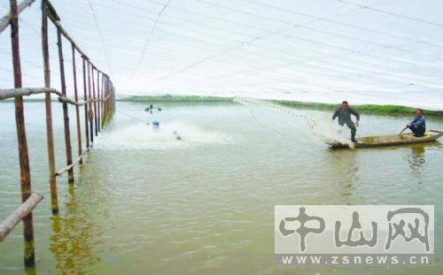 广东大同:试水高位池南美白对虾养殖中山山西猪肉