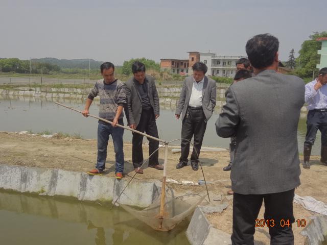 江西贵溪市泥鳅养殖悄然兴起