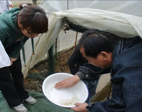 浙江杭州市对新进罗氏沼虾虾苗进行病毒抽样检测