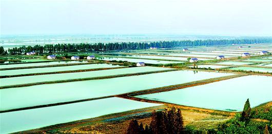 """""""   荆州创出两年段黄鳝养殖,小龙虾寄养等八大优化养殖模式,推广池塘"""