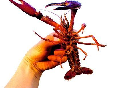 湖北小龙虾资源争夺战背后