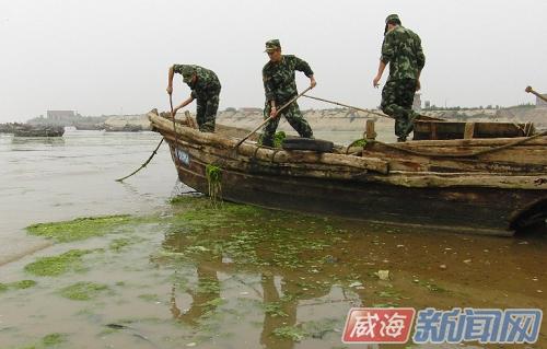 金滩海岸自黄垒河入海口至南海公园清岛湾分布宽约20米,厚5厘米的浒苔