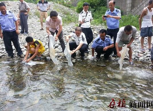 湖南张家界桑植县芭茅溪乡实施鱼类人工增殖放流