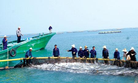 抗风浪养殖利器——深水网箱的研制现状及亟待破解问题 台风