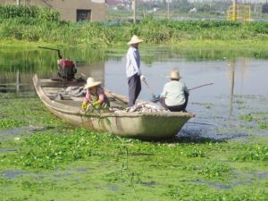 持续高温致水产养殖户损失连连 青浦大量死鱼抛