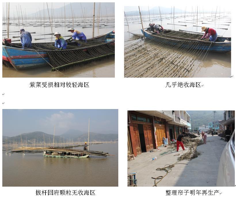 水产研究所等相关人员到马站,赤溪,金乡等渔业乡镇对该县紫菜生产情况