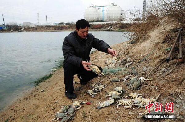 山东青岛爆燃事故附近养殖池内螃蟹鱼虾死亡