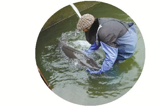 国家保护动物水晶鱼
